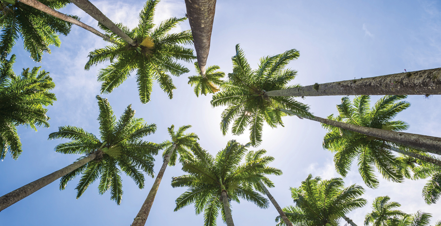 Our mighty palm trees | Fort Myers Florida Weekly