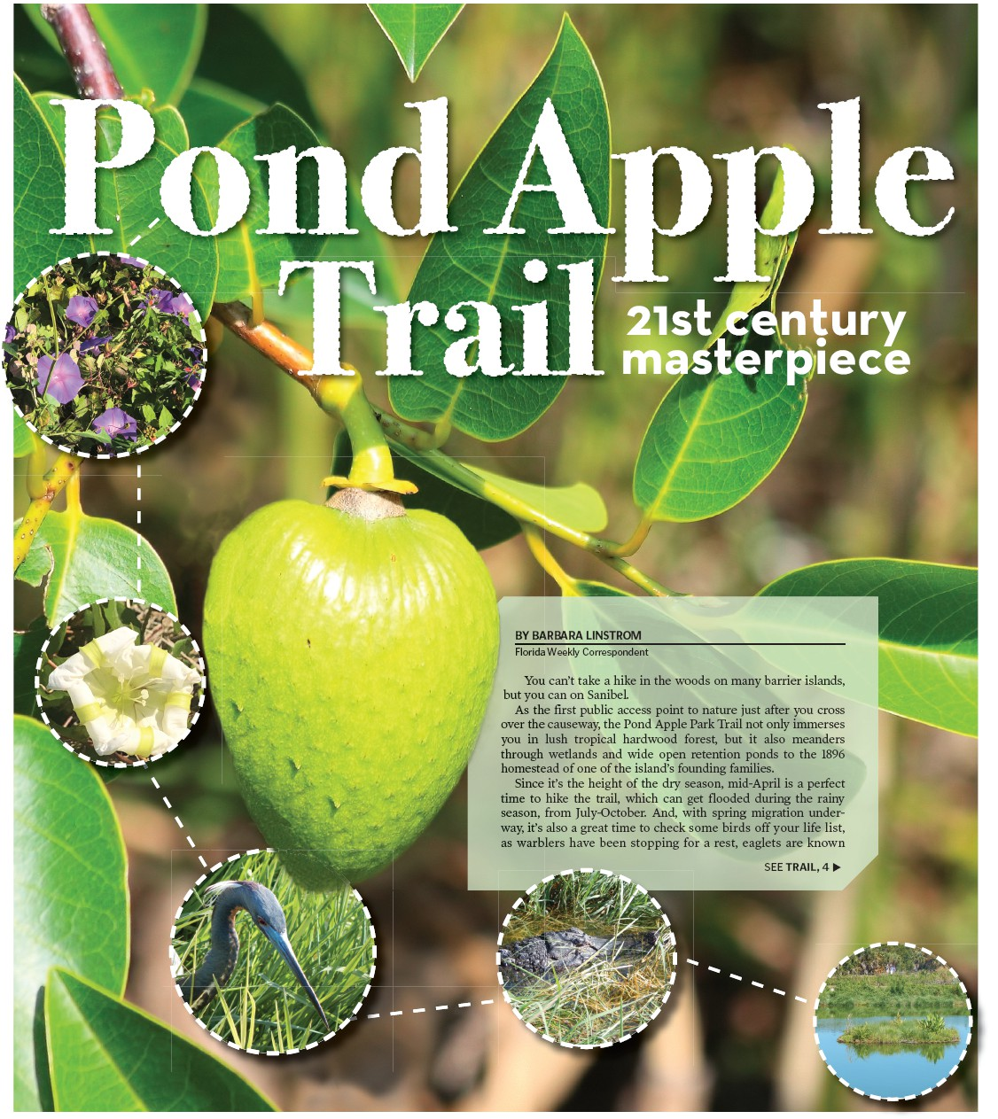 Pond Apple Trail | Fort Myers Florida Weekly